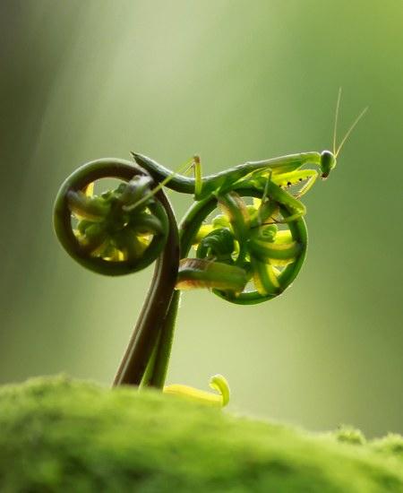 Mante religieuse Vélo